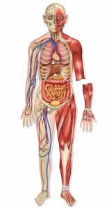 Circulation body